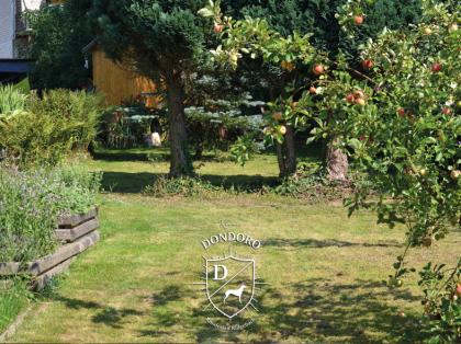Rhodesian Ridgeback Wakati Mzuri Garten Teich Lila Sonnenschein Sommer Rösrath NRW Zucht Apfelbaum