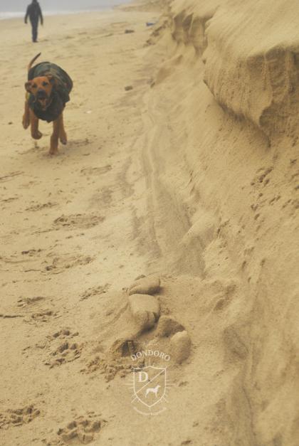 Welpe Rhodesian Ridgeback Holland Sand Strand Regen Wind Mantel