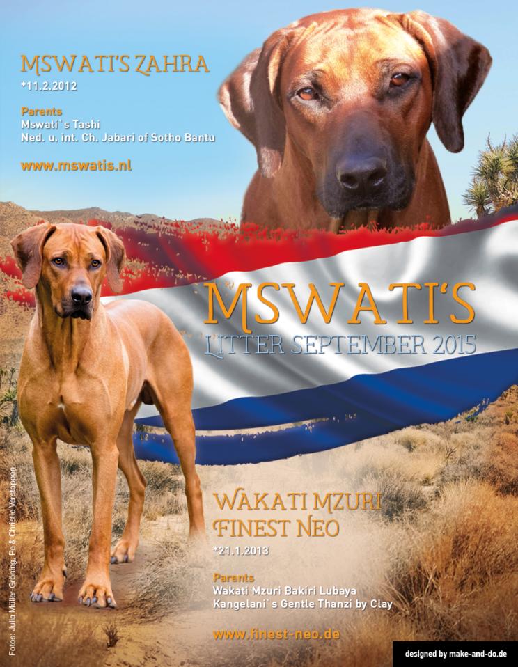 Rhodesian Ridgeback Zucht Züchter Welpen VDH FCI DZRR ELSA RRCD Niederlande Holland Mswati