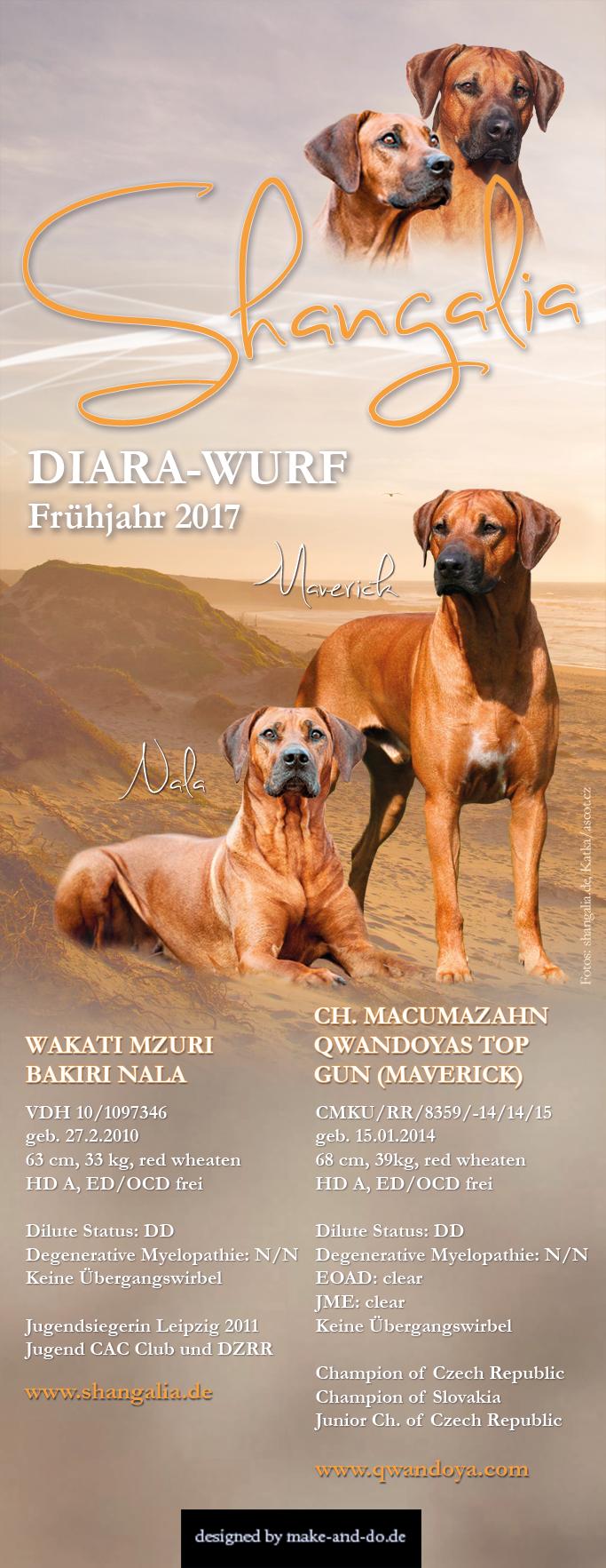 Rhodesian Ridgeback Zucht Züchter Welpen VDH FCI DZRR ELSA RRCD Diara Leipzig shangalia